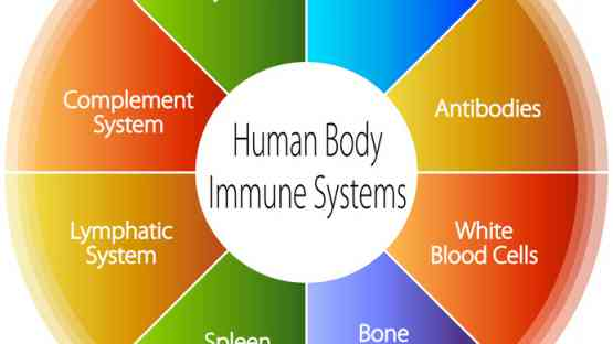 The Surprising Complexity of Our Immune System