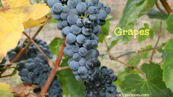 Grapes - What Makes Them So Healthy, Besides the Resveratrol Content?