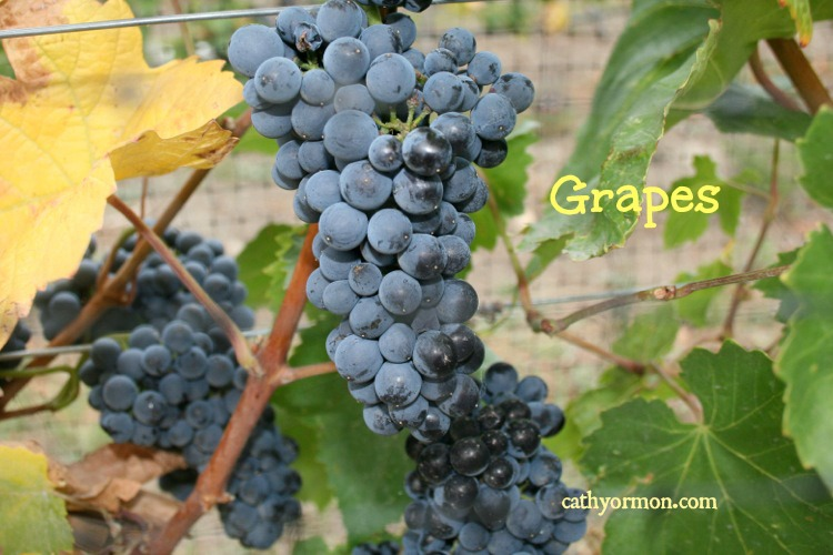Grapes What Makes Them So Healthy Besides The Resveratrol