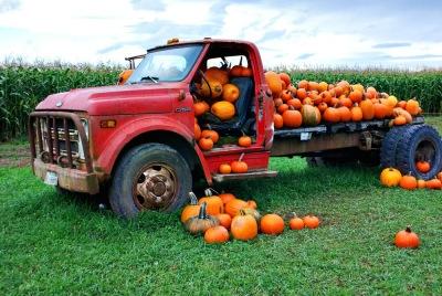 The Hidden Nutritional Value of Pumpkin